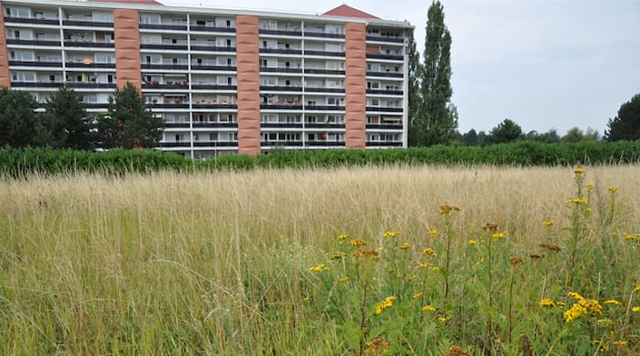 Visuel d'un immeuble et d'un endroit de biodiversité