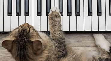 Un chat qui joue du piano