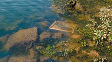 une toile dans une riviere