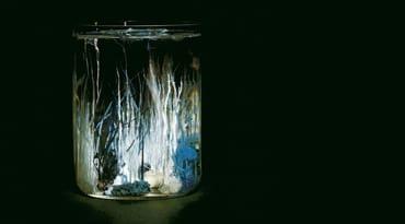 Une forêt aquatique